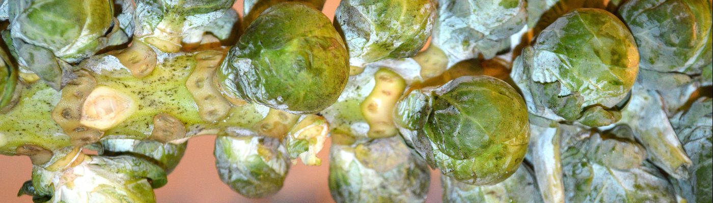 Brussels Sprouts on Stalk for Shredded Brussels with Balsamic & Honey